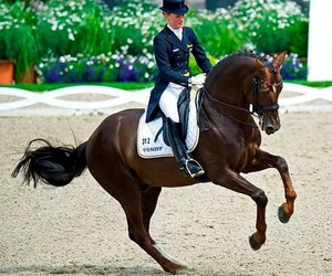 dressage, germany, and girlpower image