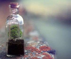 nature, bottle, and photography image