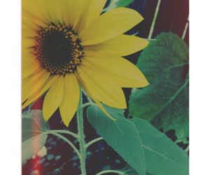 nature, yellow, and photography image