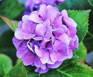 Fleurs, flowers, and lila image