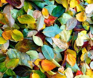 color, nature, and autumn leaves image