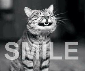 kitty, smile, and cute image