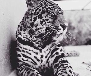 animal, fur, and white image