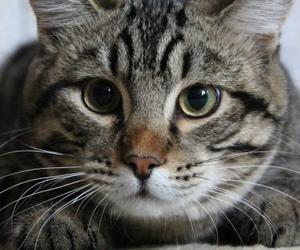 animal, cats, and eyes image