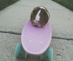 guinea pig, heart, and hipster image