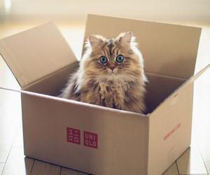 cat, box, and kitten image