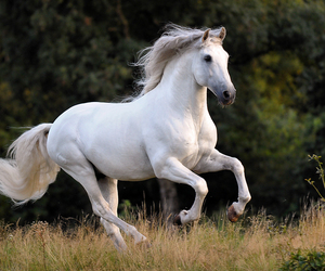horse, beautiful, and running image
