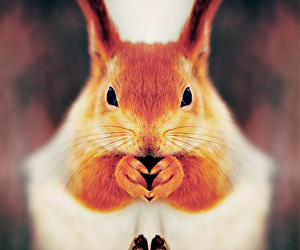 animal, squirrel, and symmetry image