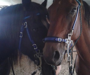 reiten, horse, and love image