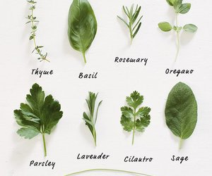 plants, green, and herbs image