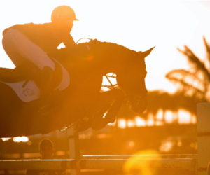 horse, jump, and sunset image