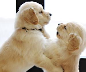 animal, baby, and dog image