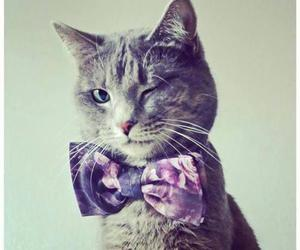 cat, animal, and bow image