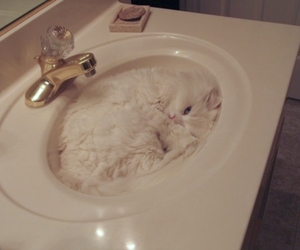 cat, wc, and cool image