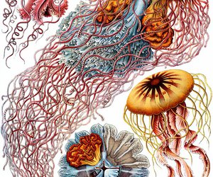 jellyfish and species image