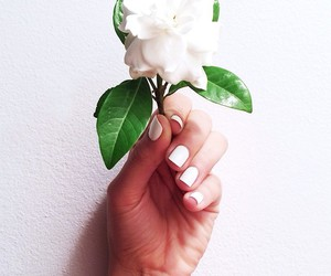 nails, white, and flower image