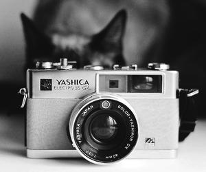 cat, camera, and pink image