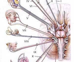 medicine and cranial nerves image