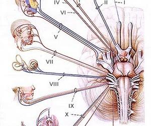 medicine and cranial nerves image