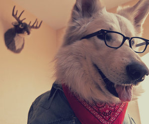 glasses, white, and puppy image