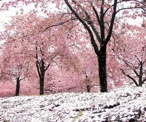 pink, pretty, and place image