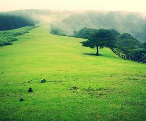 beauty, farm, and field image