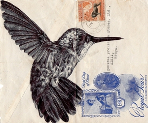 bird and envelope image