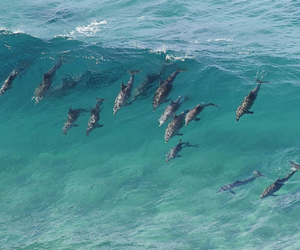 dolphin, sea, and ocean image