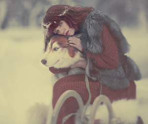 snow, dog, and wolf image