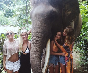 girl, friends, and elephant image