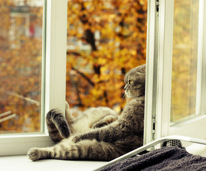 cat, autumn, and window image