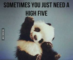 panda, cute, and highfive image