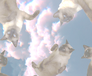 cat, header, and clouds image
