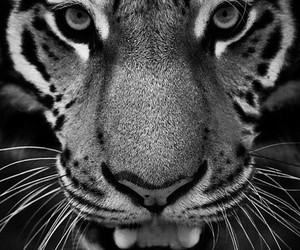 animal, foto, and look image