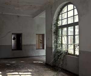 abandoned, age, and overgrown image