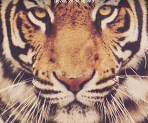 ipod, tigre, and ipad image