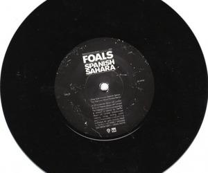 foals image