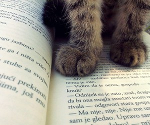 book, books, and cats image