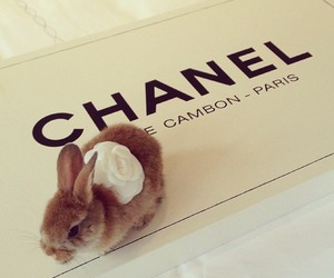 chanel, cute, and bunny image
