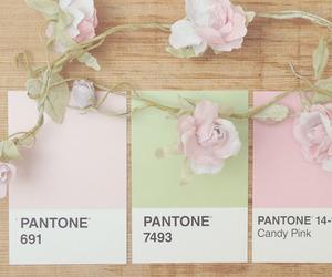 pantone, colour, and floral image