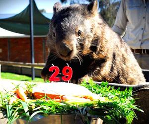 birthday, patrick, and wombat image