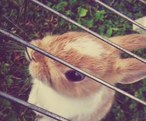 animals, bunny, and bunnys image