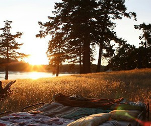 nature, bed, and sun image