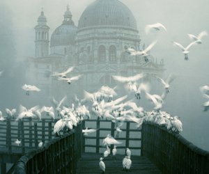 bird, venice, and fog image