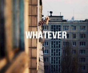 whatever and giraffe image