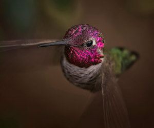 bird and hummingbird image