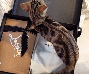cat, louboutin, and cute image