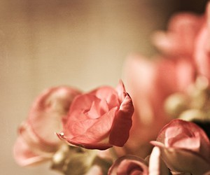 flower, roses, and flowers image