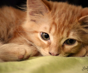 *-*, cat, and cutest image