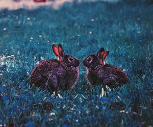 bunny, animal, and grunge image